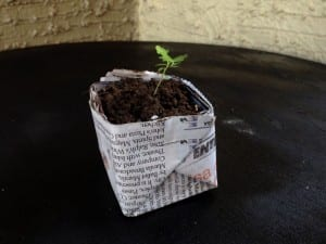 How To Make Biodegradable Newspaper Seedling Pots